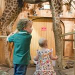 kids playing giraffe